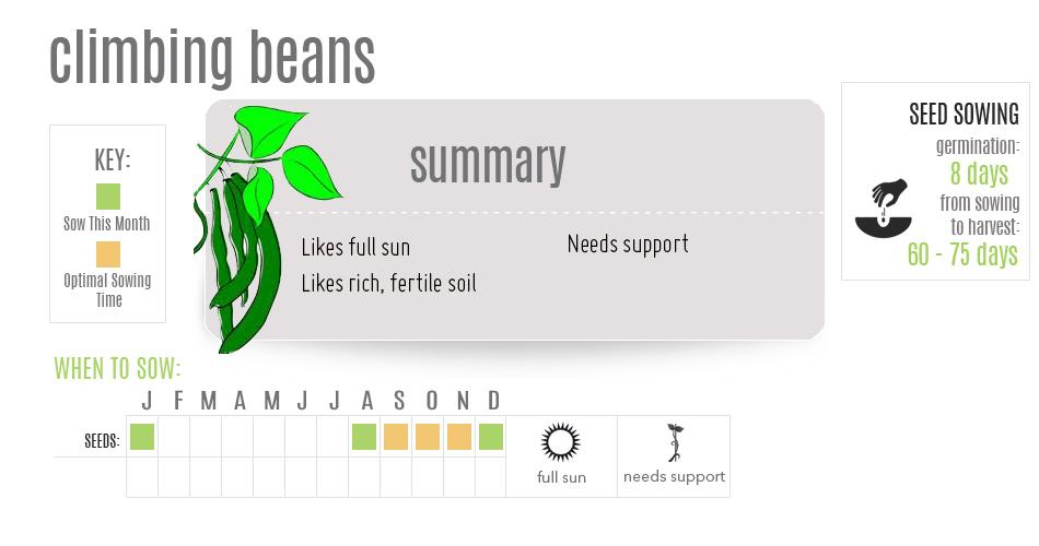 climbing_beans