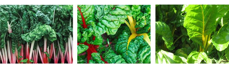 spinach_beet_swiss_chard