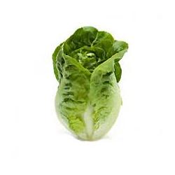 cos-lettuce