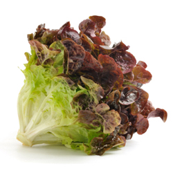 oak-leaf-lettuce