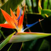 crane_flower