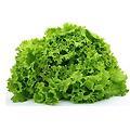 frilly_lettuce