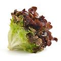 oak_lettuce