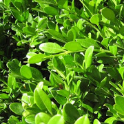 small_leaf_box