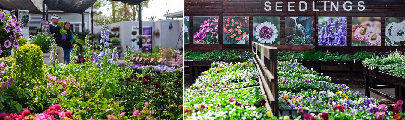Blackwood's Home of Gardening - PMB store