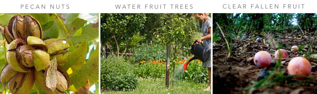Blackwood's Fruit Care in February