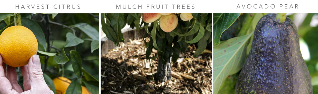 Blackwood's Fruit Care in May