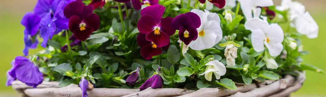 Blackwood's June in the Garden