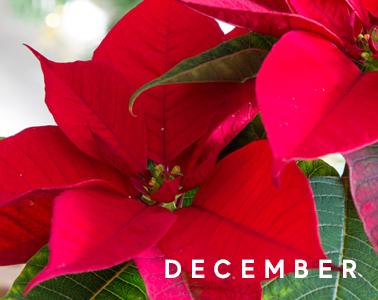 Blackwood's December in the Garden