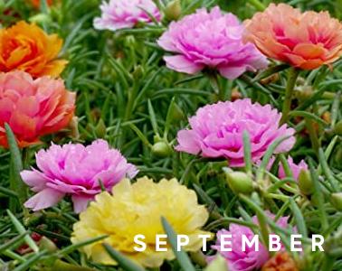 Blackwood's September in the Garden