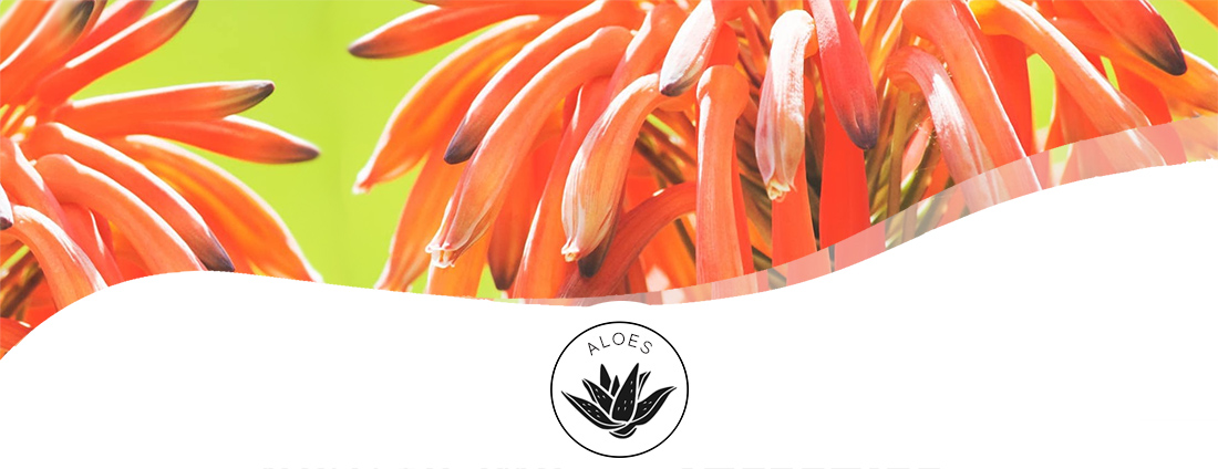 Blackwood's Aloe Care