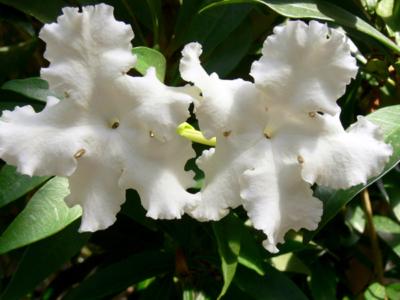 Plants that Flower in Summer