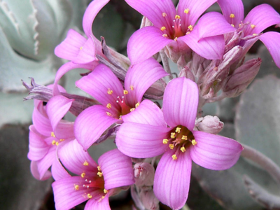 Blackwood's Plants that Flower in Winter