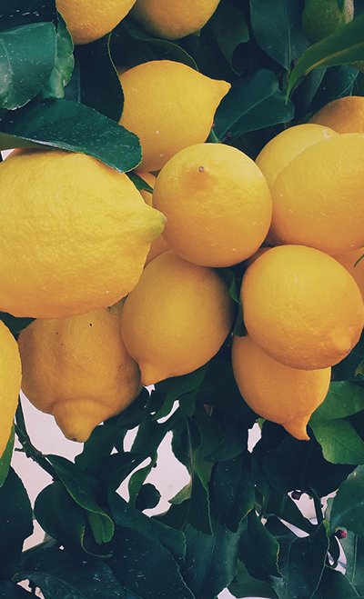 Blackwood's Lemon Care