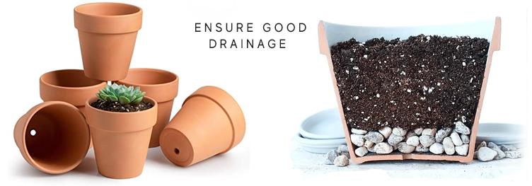 Blackwood's succulent care - drainage
