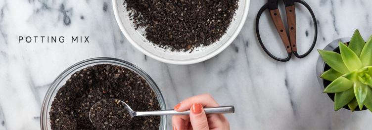 Blackwood's Succulent Care - soil