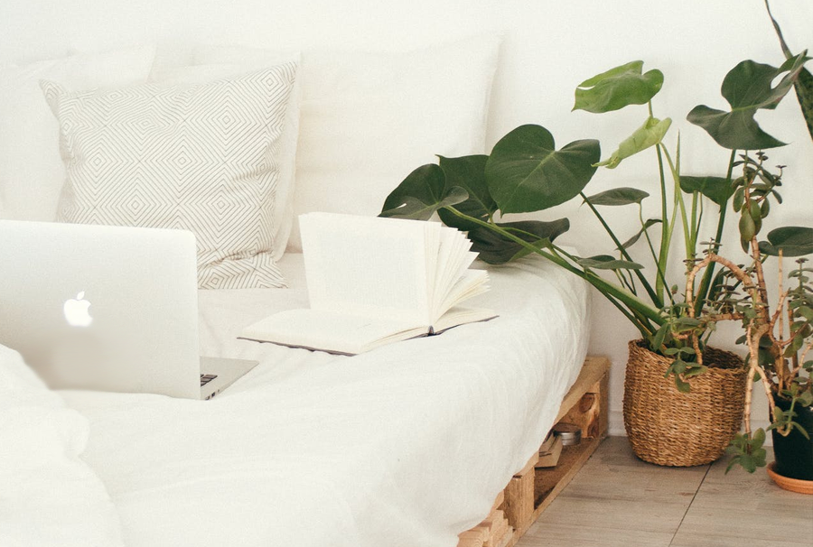 Blackwood's benefits if indoor plants