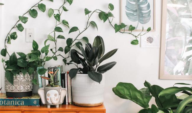 Blackwood's Benefits of Indoor Plants