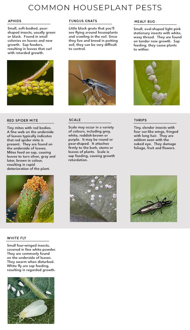 Pests on Indoor Plants