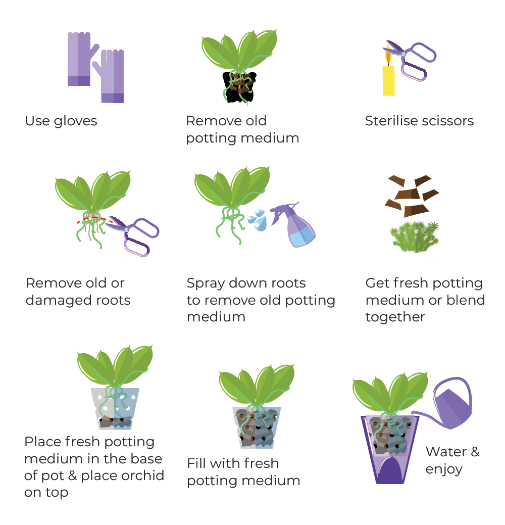 Blackwood's Repotting Orchids