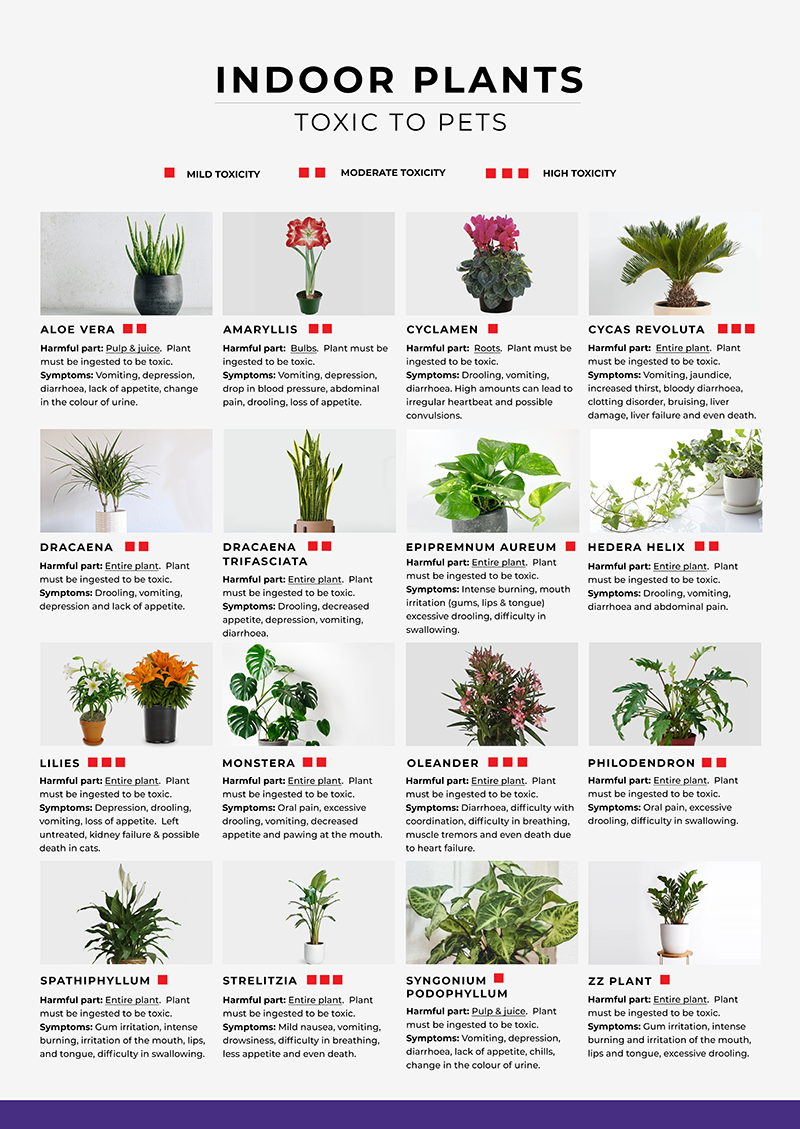 Blackwood's Plants that are Toxic to Pets